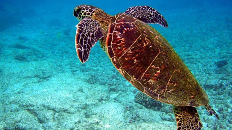 Martinique : la faune en grand danger selon l'UICN